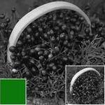 hoya-filtru-green-x1-67mm-hmc-rs102119-64067-4