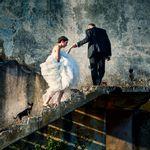 bride_doggies