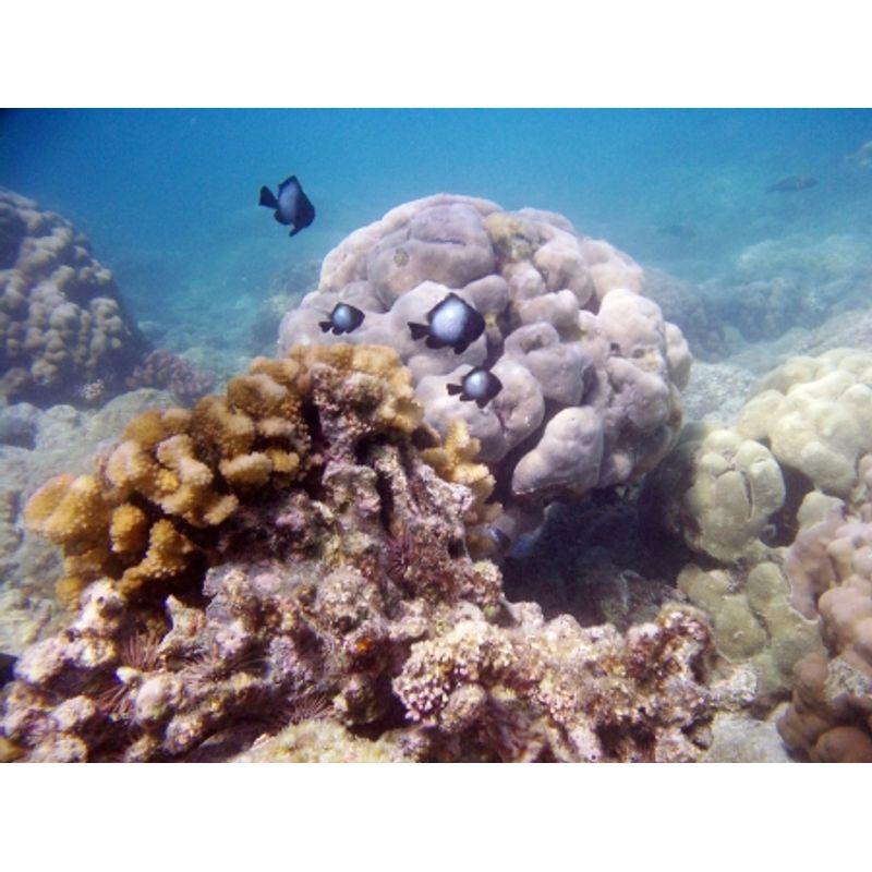 liquid-image-camera-mask-explorer-series-8-mpx-ochelari-subacvatici-cu-camera-foto-8mpx-video-vga-28260-3