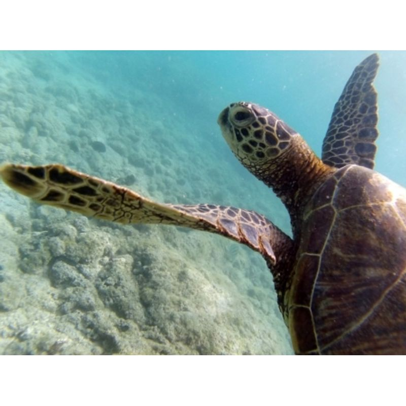 liquid-image-wide-angle-scuba-series-hd325-marime-l-ochelari-subacvatici-cu-camera-foto-video-full-hd-28290-7