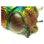 olympus-tg-2-negru-aparat-foto-subacvatic--tough--rezistent-la-inghet-si-cazaturi-25881-19