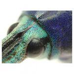 olympus-tg-2-rosu-aparat-foto-subacvatic--tough--rezistent-la-inghet-si-cazaturi-25882-10