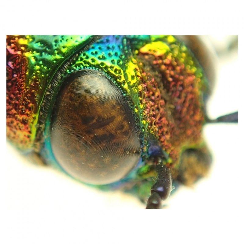 olympus-tg-2-rosu-aparat-foto-subacvatic--tough--rezistent-la-inghet-si-cazaturi-25882-11