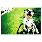 lomography-colorsplash-camera-chrome-35736-8