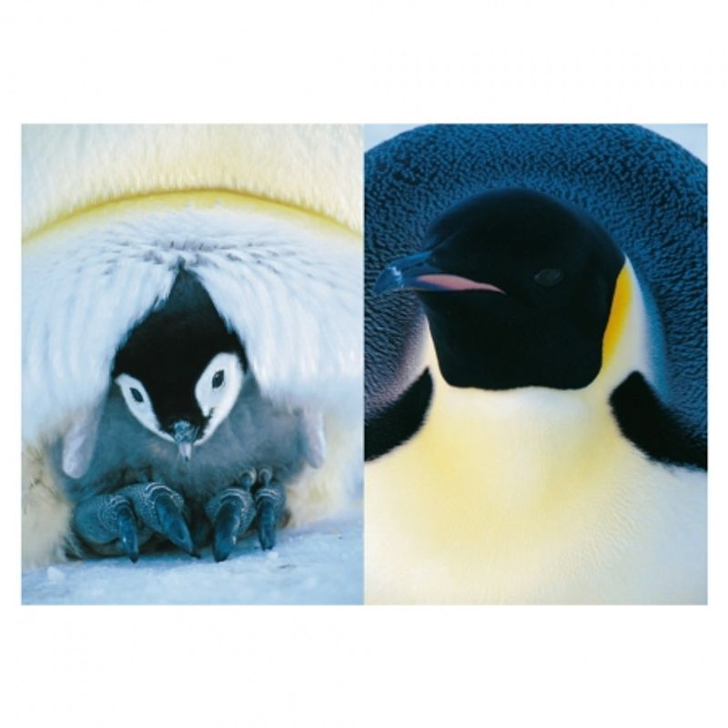 frans-lanting-penguin-28432-1