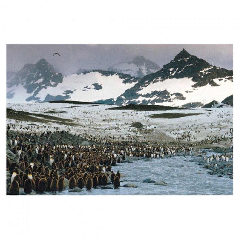 frans-lanting-penguin-28432-2