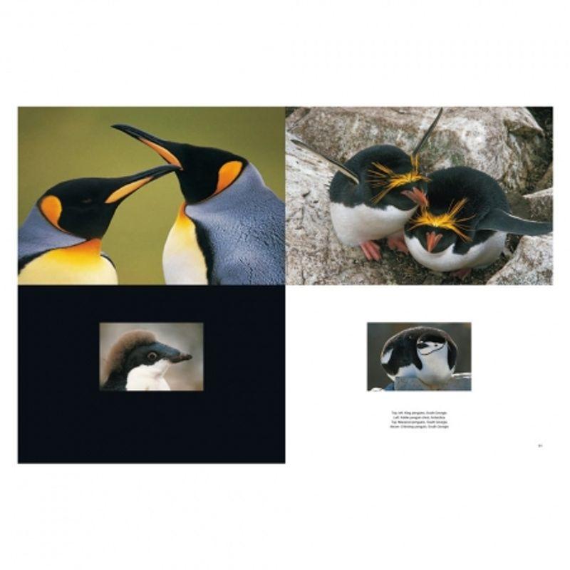 frans-lanting-penguin-28432-3