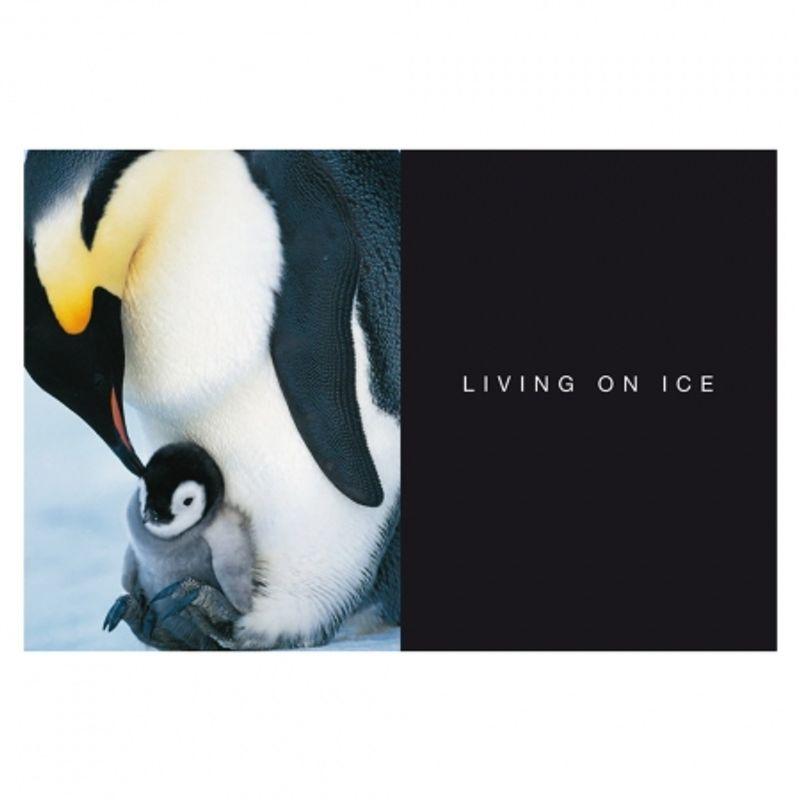 frans-lanting-penguin-28432-4