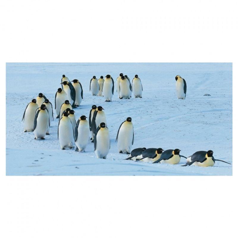 frans-lanting-penguin-28432-5