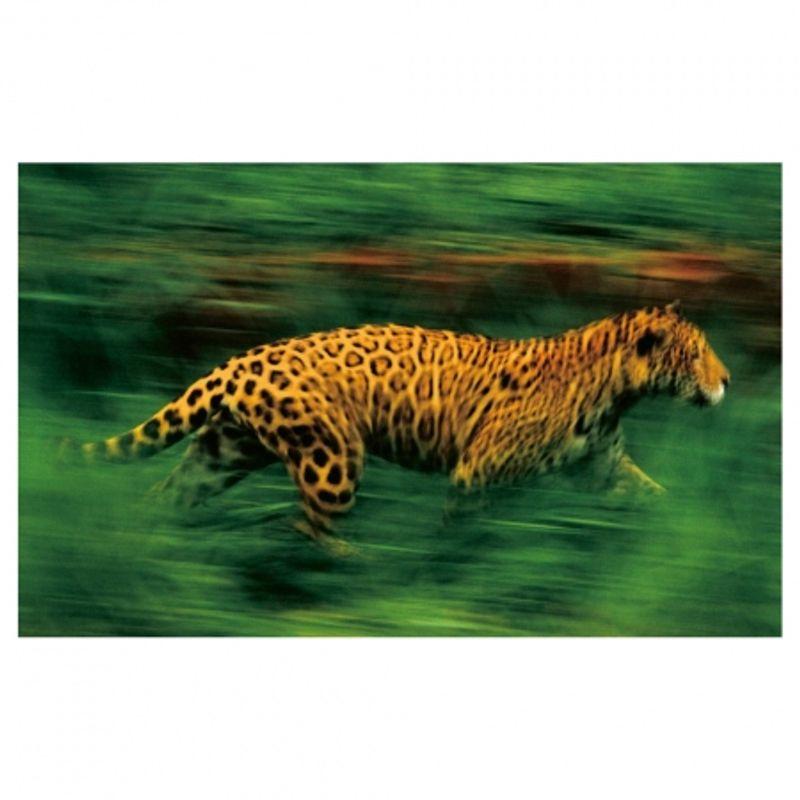 frans-lanting-jungles-28468-2