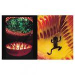 frans-lanting-jungles-28468-3