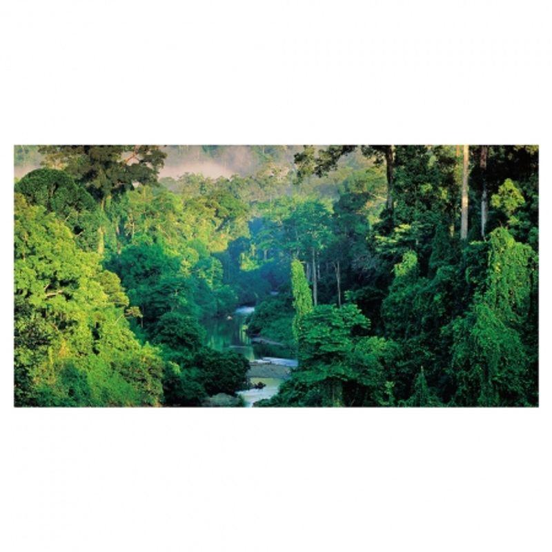 frans-lanting-jungles-28468-4