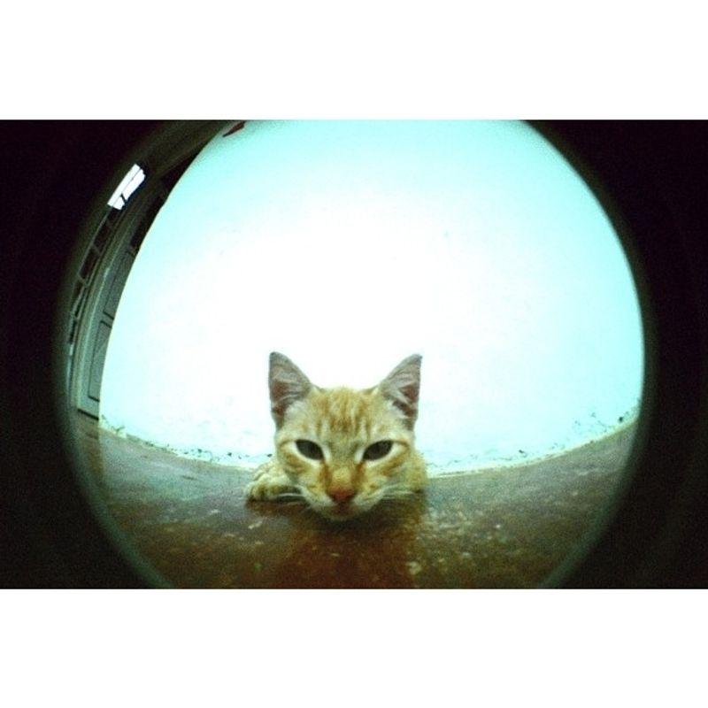 lomography-fisheye-2-brazilian-summer-aparat-foto-film--52002-266-780