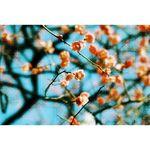 lomography-petzval-daguerreotype-achromat-64mm-f2-9-art-nikon-f--negru-57540-5