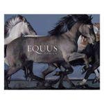 tim-flach-equus-27143