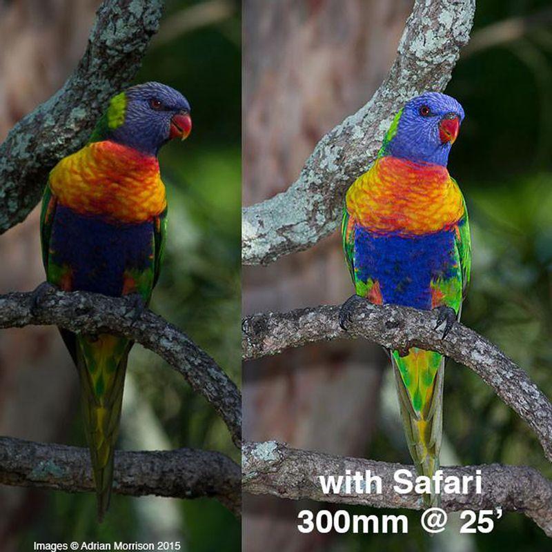 Rainbow-Lorikeet-Before-After